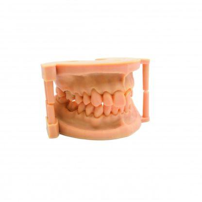 DruckWege Funktional TYP D Dental Modeling